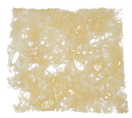 Immagine di Funori alga secca gr. 20